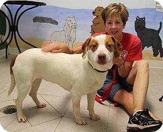 Beagle Mix Dog for adoption in Elyria, Ohio - Pebbles