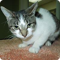 Adopt A Pet :: Lovey - Medina, OH