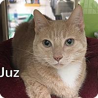 Adopt A Pet :: Juz - Foothill Ranch, CA