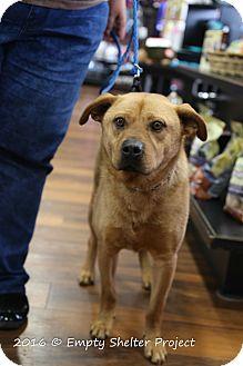 Labrador Retriever Mix Dog for adoption in Manassas, Virginia - Buster