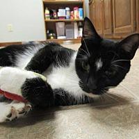 Adopt A Pet :: Lyra - Norwich, NY
