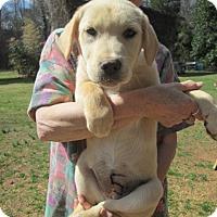Adopt A Pet :: SUNNI - Lincolndale, NY