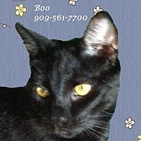 Adopt A Pet :: Boy BOO - Monrovia, CA