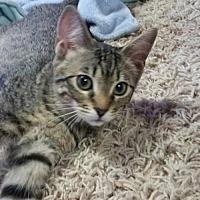 Adopt A Pet :: Suzie Q. - Napa, CA