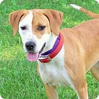Adopt A Pet :: FANCY GIRL - Washington, DC