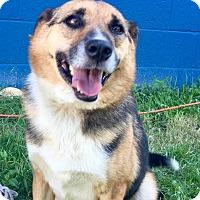 Adopt A Pet :: Lena - Waldorf, MD