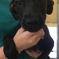 Adopt A Pet :: Cookie - Dothan, AL