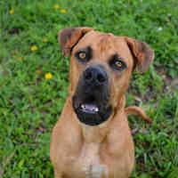 Adopt A Pet :: BUBBA - Fort Lauderdale, FL
