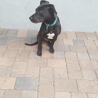Adopt A Pet :: Cherry Pie - Santa Monica, CA