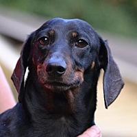 Adopt A Pet :: Chester - Rock Hill, SC