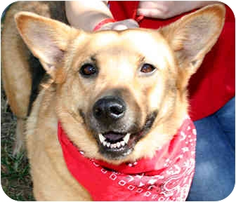 Shepherd (Unknown Type) Mix Dog for adoption in Cincinnati, Ohio - Scout