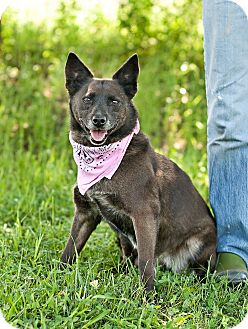 Terrier (Unknown Type, Small) Mix Dog for adoption in Carencro, Louisiana - Foxy