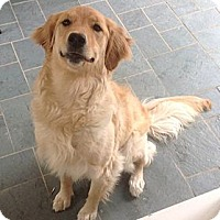 Adopt A Pet :: Lexie - New Canaan, CT