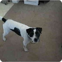 Adopt A Pet :: Trixie in Conroe - Houston, TX