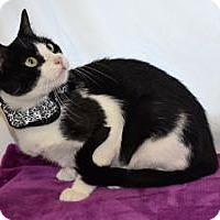 Adopt A Pet :: Sabrina - Colorado Springs, CO