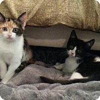 Adopt A Pet :: Arya and Tyrion - Raritan, NJ