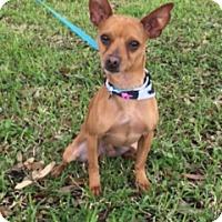 Adopt A Pet :: Casanova - Houston, TX
