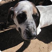 Adopt A Pet :: Bandit - Albuquerque, NM
