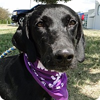 Adopt A Pet :: Laney - Lewisville, IN
