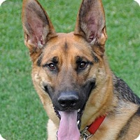 Adopt A Pet :: Chevy - Dripping Springs, TX
