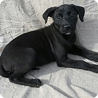 Adopt A Pet :: Elena - East Hartford, CT