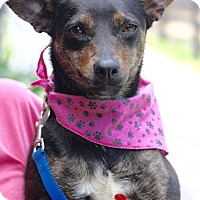 Adopt A Pet :: Maisey - West Grove, PA