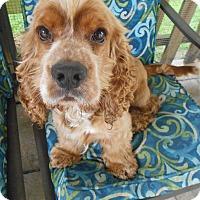 Adopt A Pet :: Buddy&Brownie-Adopted! - Kannapolis, NC