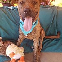 Adopt A Pet :: Lenny - Toluca Lake, CA