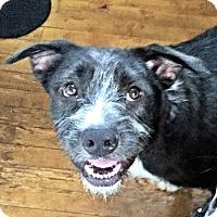 Adopt A Pet :: Roger - Rutherfordton, NC