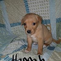 Adopt A Pet :: Hannah - Sussex, NJ