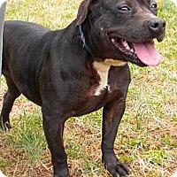 Adopt A Pet :: BB - Midlothian, VA