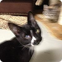 Adopt A Pet :: Jumpin Jack Flash - Wenatchee, WA