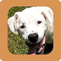 Adopt A Pet :: WYNDY - Hendersonville, TN