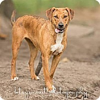 Hound (Unknown Type) Dog for adoption in Havana, Florida - Jasmine
