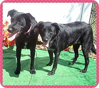 Labrador Retriever Mix Dog for adoption in Marietta, Georgia - BELLA & BEAR
