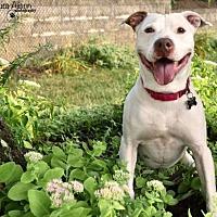 Adopt A Pet :: Oliver - Rockaway, NJ