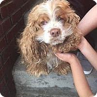 Adopt A Pet :: Martha Mae - Shawnee Mission, KS