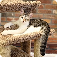 Adopt A Pet :: Dack - Trevose, PA