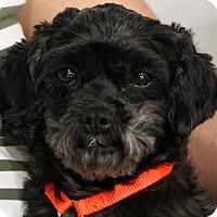 Adopt A Pet :: Allie - Greensboro, NC