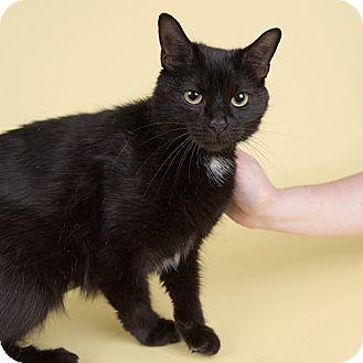Domestic Shorthair Cat for adoption in Wilmington, Delaware - Mama Cat