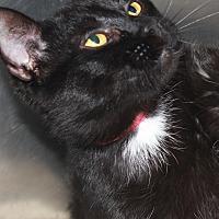 Adopt A Pet :: TINA - Clayton, NJ