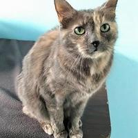 Adopt A Pet :: Lena - Fairfax, VA