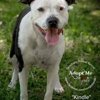 Adopt A Pet :: Kindle - Alabaster, AL