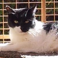 Adopt A Pet :: Lane - Mountain Center, CA
