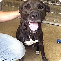 Adopt A Pet :: Margie - Jackson, MI