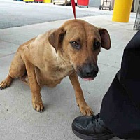 Adopt A Pet :: Vicky - Newnan City, GA