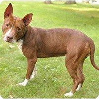 Adopt A Pet :: Sassy - Chicago, IL