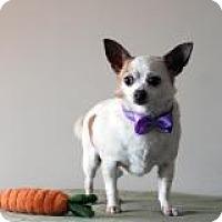 Adopt A Pet :: Thumper - Mount Gretna, PA