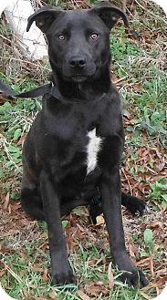 Labrador Retriever Mix Dog for adoption in Minneapolis, Minnesota - River