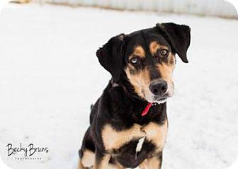 Shepherd (Unknown Type) Mix Dog for adoption in Sauk Rapids, Minnesota - Keely